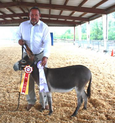 2016 Tennessee State Fair Miniature Donkey Show