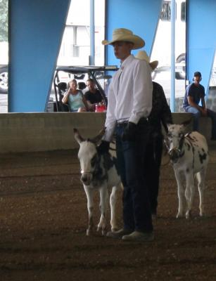 2017 Great Celebration Mule & Donkey Show